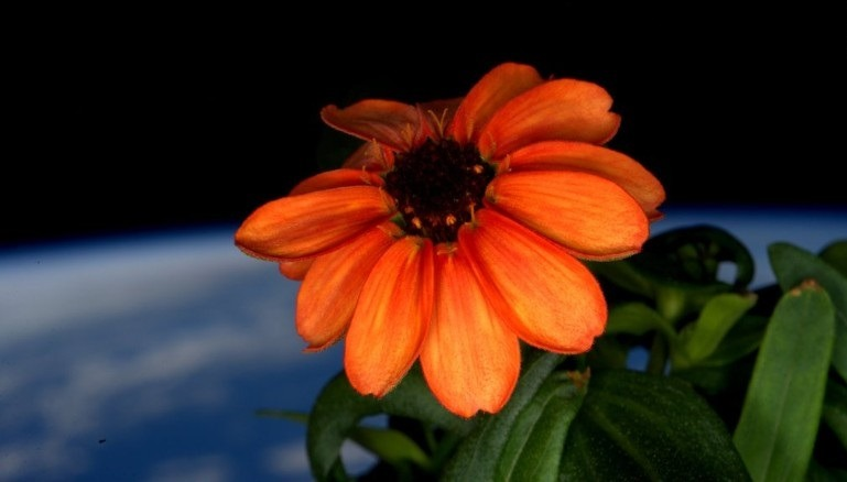 160118103230-space-flower-twitter-scott-kelly-exlarge-169-1-1619629437.jpg